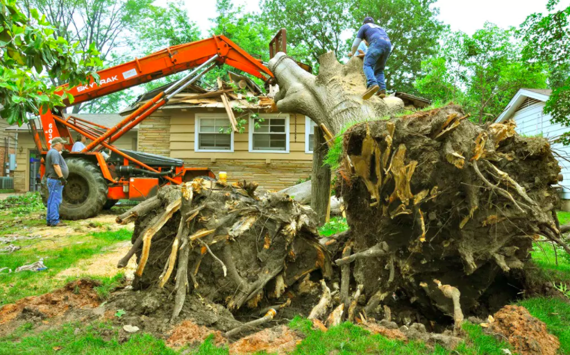 What Should Residents of Herndon Expect from Their Tree Service Pros?
